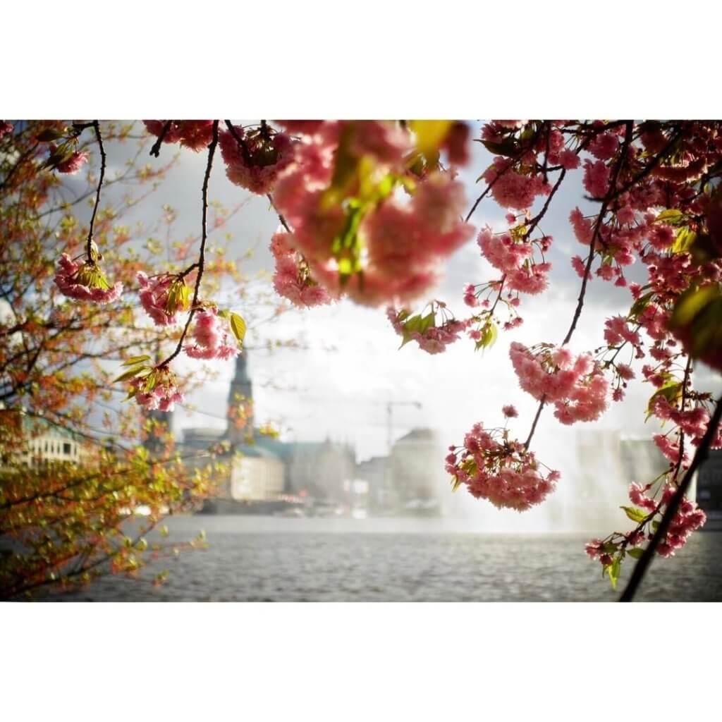 парки гамбурга