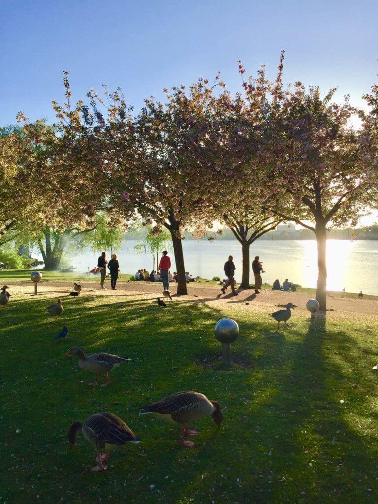 озеро альстер гамбург